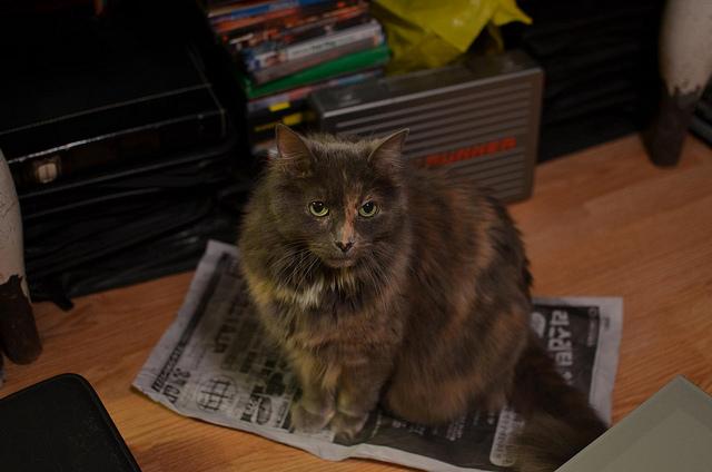 6884569467 fa19b31c3d z - どうして猫は新聞の上に乗っかるのか?(写真まとめ)