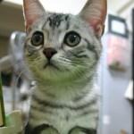 猫の雄の一部を拡大すると、トゲトゲだらけだった件について