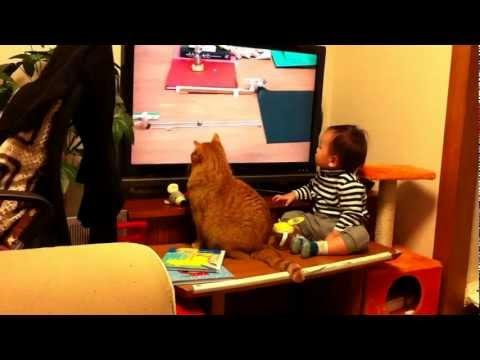 130304cat - テレビ画面を飛び出る猫ピタゴラスイッチがすごい(動画)