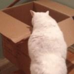 猫により、段ボール式エスカレーターが考案される。ただし下りのみ