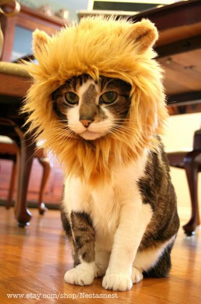 130510lionhat01 397x600 - 一瞬で百獣の王化する、猫用ライオン帽子