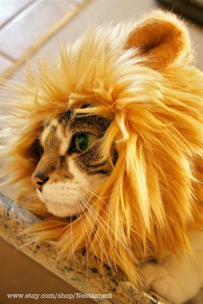 130510lionhat02 400x600 - 一瞬で百獣の王化する、猫用ライオン帽子