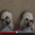 もし、猫がブーツになったなら(動画)