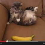 猫の新たな天敵に「バナナ」が追加される(動画)
