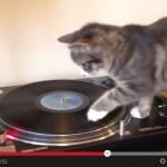 DJ猫、全身を使ったプレイで自らも回る(動画)
