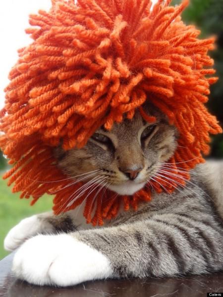 130609cathat 450x600 - 結構かわいい、毛糸の猫用帽子