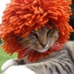 結構かわいい、毛糸の猫用帽子