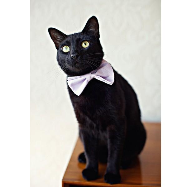 130613cattie 600x600 - 蝶ネクタイとネクタイは、猫にも似合うことが判明