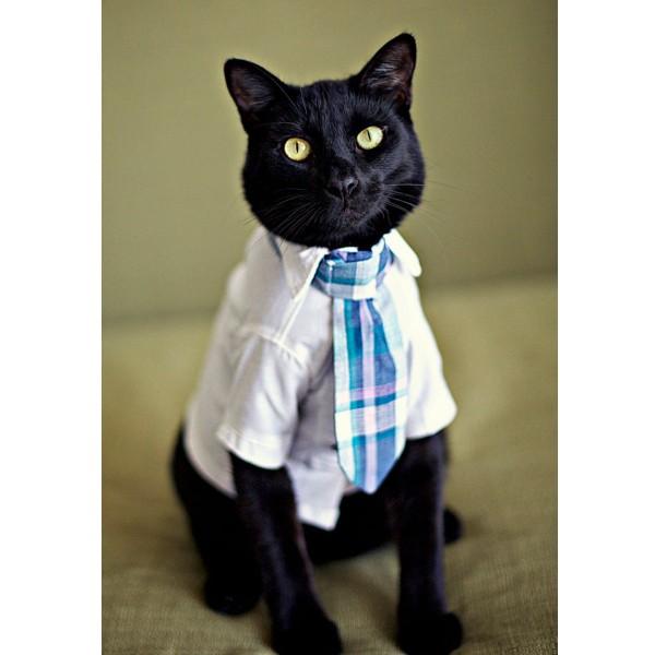 130613cattie2 600x600 - 蝶ネクタイとネクタイは、猫にも似合うことが判明
