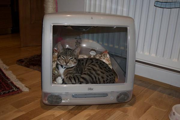 130711imaccat02 600x399 - 最初期のiMacは、猫ハウスに最適であると分かる写真まとめ