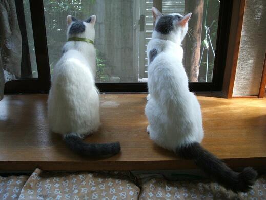 130715cat - ハイレベル間違い探しに近い、そっくりすぎる羊毛フエルト猫