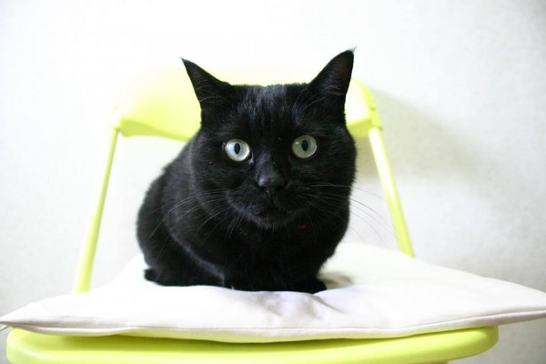 130720nene 600x400 - 黒猫ネネの一周忌を、猫を愛する皆さんによる「猫の写真展」で追悼@仙台