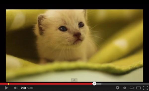 130724catsong02 600x365 - 3匹の子猫を世話しながら歌う、ミュージックビデオ(動画)