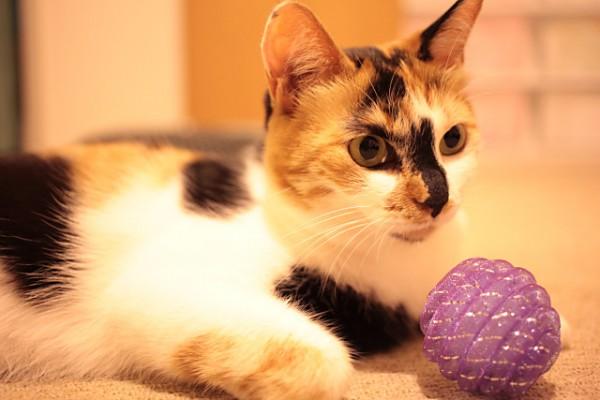 130725 cat 600x400 - 猫アレルギーの原因が特定された模様。新しい治療法や新薬開発に繋がるかも