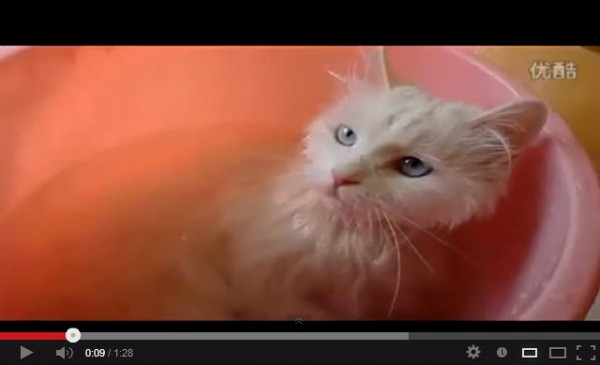 130726catinbath 600x365 - バケツの湯船に浸かって恍惚とする猫(動画)