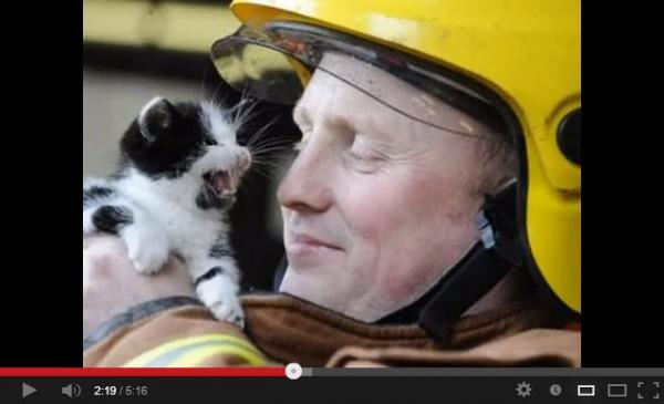 130729catrescue 600x365 - 消防士に救出された猫のまとめ動画