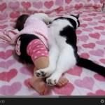 ハートフルすぎる、猫と赤ちゃんのお昼寝動画
