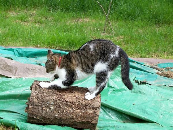 130820catScratching 600x450 - 猫の爪とぎから、家具や壁を守る7つの方法