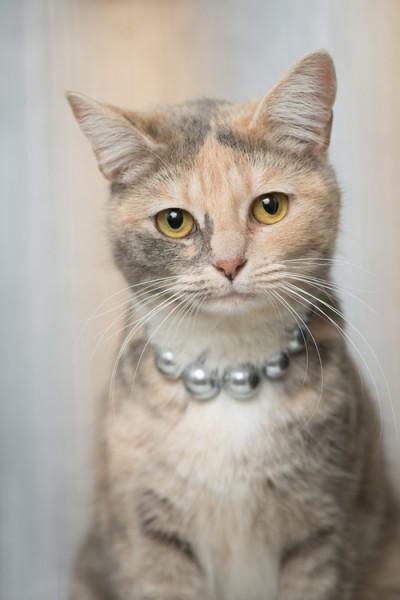 130915cat 400x600 - 本日の美人猫vol.33