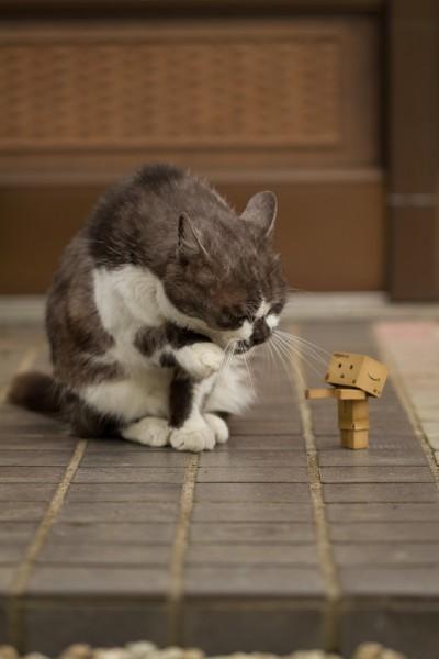 130916danbowithcat00 400x600 - ほんわかとかわいい「猫×ダンボー」写真