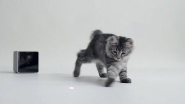 131001petcube 600x337 - HDカメラ+レーザーポインタをスマホでリモート操作できる、猫ガジェット「Petcube」