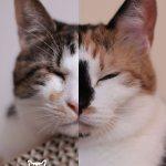 「ネコライオン」展っぽい写真を猫ジャーナルで作るとこうなる