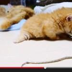 進撃の子猫、マットレスに行く手を阻まれて足が空回り
