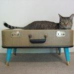 モダンな猫ベッドシリーズ:スーツケースで猫ベッドをDIY