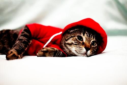 131020cat - 本日の美人猫vol.39