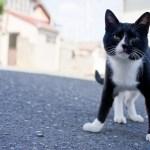 日本の「猫島」探訪:石巻市・田代島