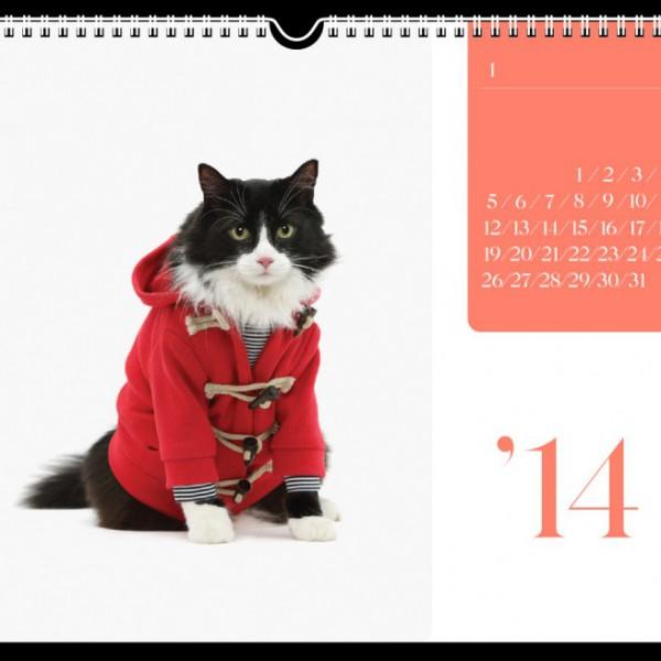 131103catcalendar01 600x600 - ファッションモデル猫が彩りを添える、2014年猫カレンダー