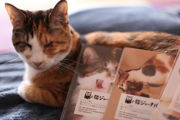 131103catpostcard01 600x400 - 猫ジャーナル謹製のポストカードセット、吉祥寺のギャラリー「イロ」にて配布中