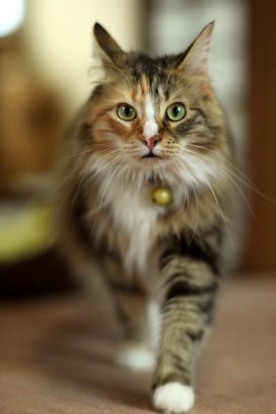 131110cat02 400x600 - 本日の美人猫vol.45
