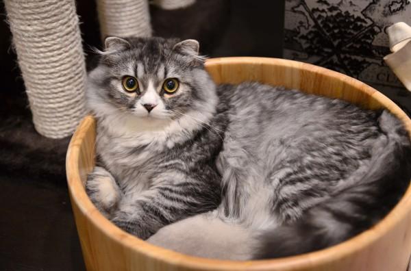 131110cat alu 600x396 - 本日の美人猫vol.46