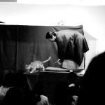 猫カフェで開催する落語会「猫楽」