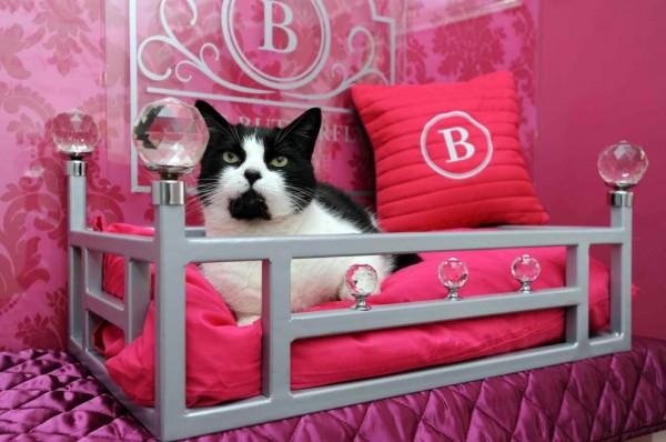 131205cathotel01 600x398 - ゴージャスにもほどがある、イギリスの猫ホテル「The Ings Luxury Cat Hotel」