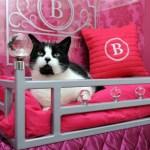 ゴージャスにもほどがある、イギリスの猫ホテル「The Ings Luxury Cat Hotel」