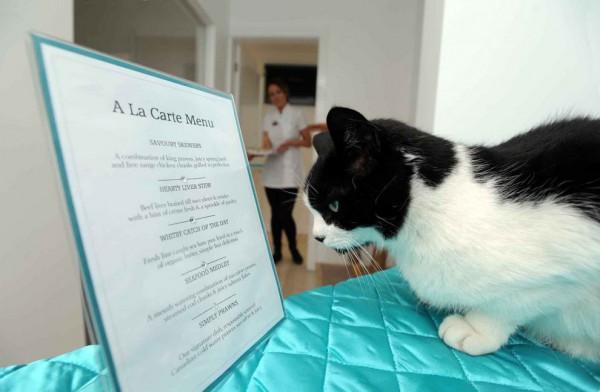 131205cathotel06 600x392 - ゴージャスにもほどがある、イギリスの猫ホテル「The Ings Luxury Cat Hotel」