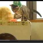 ルイージ猫、マリオ猫を穴に突き落とす(動画)