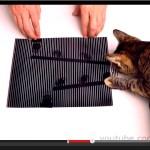 猫の目でも動いて見える、スリットアニメーション(動画)