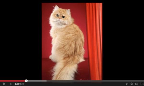 131226catdrawing01 600x359 - なんだ、写真…じゃない…だと…。と思わされるリアルな手描き猫(動画)