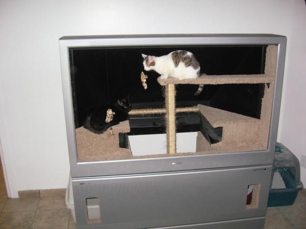 140104diycathouse 600x450 - 60インチのテレビ、猫ハウスに生まれ変わる
