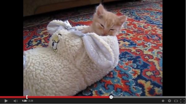 140104shoecat 600x336 - ワンコ靴に入って遊ぶ子猫、そのまま就寝