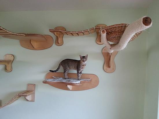 140115catathletic04 - ドイツの猫アスレチックハウスの、本気度がすごい
