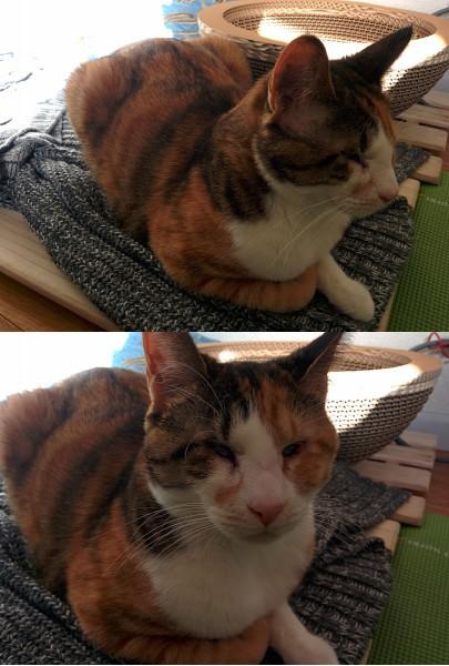 140121camera phone02 405x600 - スマホでの猫写真がレベルアップする、たった1つの簡単なコツ