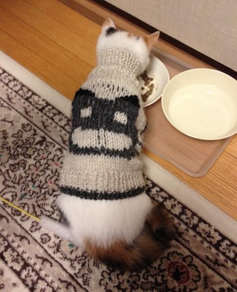 140122tama01 486x600 - 猫柄のタートルセーター、猫柄の上からでもよく似合う