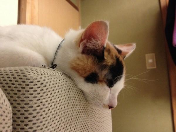 140122tama02 600x450 - 猫柄のタートルセーター、猫柄の上からでもよく似合う