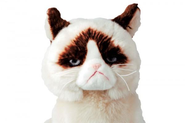 140123 GrumpyCat00 600x400 - 不機嫌顔の猫「GrumpyCat」のぬいぐるみが、PLAZAで先行販売