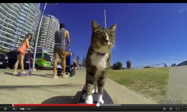 140124skateboardcat 600x360 - スケボーに乗る猫、さっそうと街中を駆ける