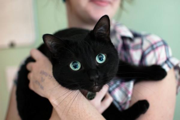 140126cat 600x399 - 本日の美人猫vol.59